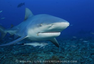 Moment Before Impact with MR Bull Shark
